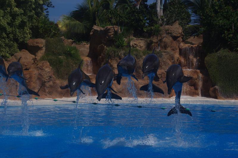 Delfine im Tierpark