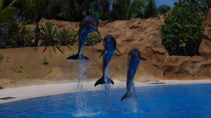 Springende Delfine in einem Tierpark