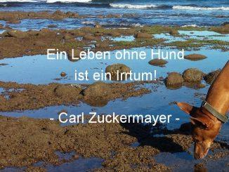 Zitate und Weisheiten über Hunde